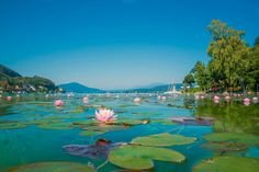 """SUP at the """"Wörthersee"""" by Martin Steinthaler on Klagenfurt, Places To Travel, Travel Destinations, Places To Go, Great Places, Beautiful Places, Carinthia, Austria Travel, Parcs"""