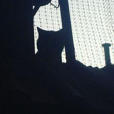 Incognito. #catshadow #catofheday #surpriseguest