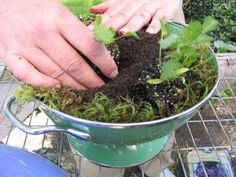 A DIY master gardener offers suggestions on different kinds of garden containers.