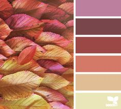 color season (design seeds)
