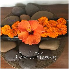 Good Morning images with Flowers that most beautiful and heart touching. share Good Morning images with Flowers with your friends and family. Good Morning Dear Friend, Free Good Morning Images, Good Morning Photos, Good Morning Good Night, Morning Pictures, Good Morning Greeting Cards, Good Morning Greetings, Happy Morning, Good Morning Beautiful Flowers