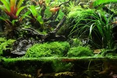 90 Gallon Vivarium - Pic Heavy - Page 3 - Orchid Board - Most Complete Orchid Forum on the web !