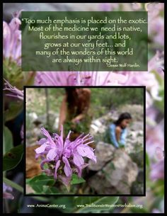 This is so true! We look for a quick fix from pharmaceutical drugs when what we really need is literally at our feet.