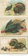 Vintage Thanksgiving Postcard LOT 3 Tuck A/S R J Wealthy Turkey