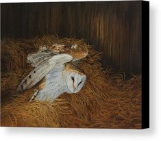 Painting of a Barn Owl landing on hay in a barn. Title: Night Visitor - Barn Owl is an original oil painting by Johanna Lerwick Wildlife/Nature Artist. Several size prints available. Owl Canvas, Canvas Art, Canvas Prints, Realism Art, Nature Paintings, Fine Art Paper, Fine Art Prints, Original Art, Barn