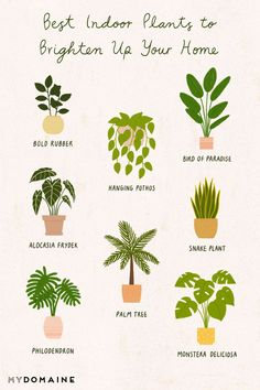 8 Beautiful Low-Light Plants to Brighten Up Your Home 8 Beautiful Low-Light Pla. 8 Beautiful Low-Light Plants to Brighten Up Your Home 8 Beautiful Low-Light Plants to Brighten Up House Plants Decor, Plant Decor, Best Indoor Plants, Indoor Garden, Belle Plante, Low Light Plants, Bedroom Plants, Low Lights, Growing Plants
