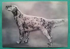 Animali: Cani - Campione Setter Inglese del Brembo - All. Bramani Bergamo it.picclick.com