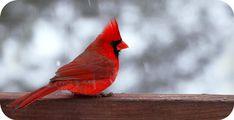 Σεληνοδείκτης: Bird Symbolic Meaning, in Tarot Cards, by Avia/ Σύ. Bird Meaning, Major Arcana Cards, Cardinal Birds, Tarot Reading, Tarot Cards, Aerial View, Meant To Be, To My Daughter, Symbols