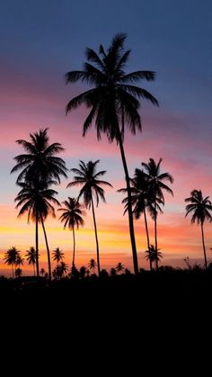 Art 367817494564458978 - Summer Sunset photography sunset beach beautiful ocean tropical travel palm trees vacation Source by spikemcfry Cute Wallpapers, Wallpaper Backgrounds, Neon Backgrounds, Tree Wallpaper, Wallpaper Desktop, Beach Wallpaper, Best Wallpaper For Android, Nature Wallpaper, Summer Themed Wallpaper