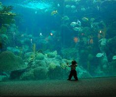 Florida Aquarium - Tampa