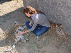 @andrea_arden and #tiger cubs. #tigers #cubs #tigercubs #atigerstail #movies #films #children #kids Epic Pictures, Group Pictures, Tiger Tails, Tiger Cub, Video On Demand, Hd Video, Big Cats, Lds, Young Women