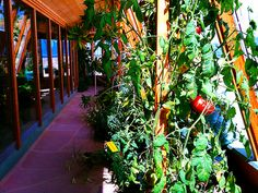 earthship garden first story Sustainable Architecture, Sustainable Design, Sustainable Living, Residential Architecture, Contemporary Architecture, Home Building Design, Building A House, Earthship Home, Earthship Biotecture