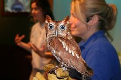 owls in tennessee - Google Search
