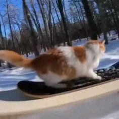 Funny Cute Cats, Cute Baby Cats, Cute Cats And Kittens, Cute Funny Animals, Cute Baby Animals, I Love Cats, Crazy Cats, Animals And Pets, Cute Animal Videos