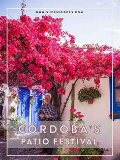 Gorgeous flower filled courtyards during Cordoba's annual spring festival in Southern Spain (Andalusia). click through to read all about it.