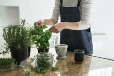 Valószínűleg sokan jártunk már úgy, hogy megvettük a csoda szép fűszernövényeket a boltban, esetleg a kertészetben, azonban pár hét után egyszerűen elszáradtak vagy elrohadtak. Ha nem akarsz lemondani a friss fűszerekről, de nem is szeretnél minden hónapban újat venni, akkor az alábbi tippek Neked szólnak. Best Herbs To Grow, Growing Herbs, Cilantro Plant, Tea Varieties, Natural Mosquito Repellant, Natural Air Freshener, Planting Shrubs, French Dishes, Aromatic Herbs