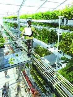 Superfarm - Prospective research studies on urban farming (2006 - 2012) - An intensive market gardening greenhouse associated with a supermarket | SOA Architects, France