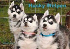 Husky Welpen Kalender