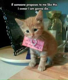 Funny Animal Pictures - View our collection of cute and funny pet videos and pics. New funny animal pictures and videos submitted daily. Baby Animals, Funny Animals, Cute Animals, Funniest Animals, Animal Memes, Wild Animals, Cute Kittens, Cats And Kittens, Orange Kittens
