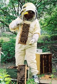 Beekeeping: Learn what it takes to become a successful beekeeper and see how to build a hive.