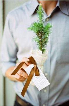 tree sapling favors