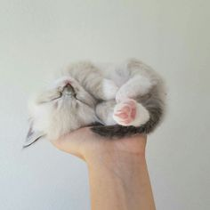 Handful of cuteness!