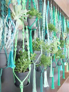 De 7 hipste hangplanten als blikvanger thuis of op kantoor | Storyplanter