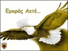 . Bald Eagle, First Love, Bird, Animals, Birthday, Athens, Animales, Birthdays, First Crush