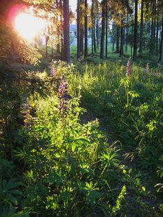 Lupiini<3 Country Roads, Amazing, Nature, Naturaleza, Nature Illustration, Off Grid, Natural