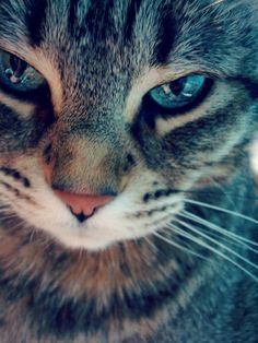 New cats beautiful eyes gatos 35 Ideas Pretty Cats, Beautiful Cats, Animals Beautiful, Pretty Kitty, Gorgeous Eyes, Beautiful Pictures, Funny Cats, Funny Animals, Cute Animals