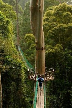 Borneo Rainforest Canopy Walkway, this is beautiful! Would you dare to walk across it? this is how I feel when the I AM Presence is working my love of life and God. Breathtaking!