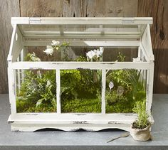 glass teapot terrarium mini gewaechshaus holz weiss shabby chic gardening pinterest. Black Bedroom Furniture Sets. Home Design Ideas