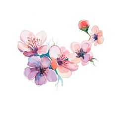 Art Print: The Spring Flowers Watercolors Isolated on the White Background by la_balaur : 12x12in