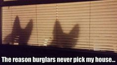 Best crime deterrent ever!