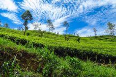 Sri Lanka Two to Three Week Itinerary : Flashpacking Travel Blog