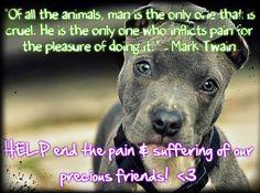 Stop Animal Cruelty Quotes. QuotesGram