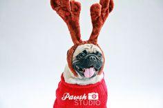 Christmas #pug!