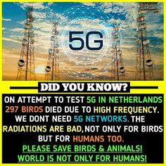 So please save Birds 🐦