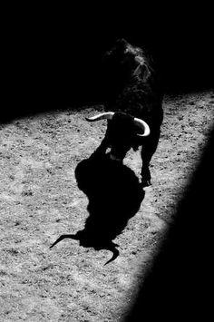Spaniard Bull