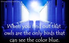 Annabeth is a daughter of Athena. Athena's bird is the owl. Percy's color is blue. ANNABETH WAS MADE FOR PERCY!!!