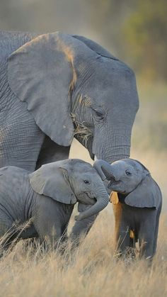 Mamãe super feliz com seus rebentos