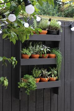 Going Gardening : Garden herb wall shelves painted black : Simple Modern Outdoor Growing Spaces