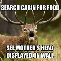 1000 Images About Deer Memes On Pinterest Deer Cats