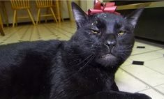 The 4 Stages of Catnip Withdrawal, Explained By Sylvester the Talking Cat