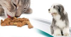 Recevez un échantillon de nourriture pour animaux gratuite. http://rienquedugratuit.ca/echantillon-gratuit/recevez-un-echantillon-de-nourriture-pour-animaux-gratuite/