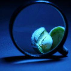 Macro shots with magnifying glass   #macro #photo #makro #fotoğraf #deneme #greenalmond