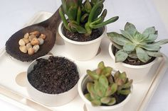 Succulents and 9 other fun gardening projects for kids!