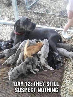 Funny, Memes, Pictures: funny-animals-23-1-1
