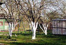 (+1) тема - Обработка садовых деревьев осенью | 6 соток