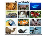 File folder game to match animal names to animal pictures. Preschool Bible, Preschool Learning, Preschool Activities, Teaching Kids, Student Teaching, File Folder, Folder Games, Bible Games, Children's Bible